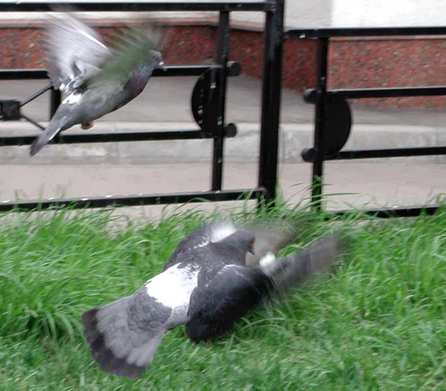 how to stop pigeons on ny balcony