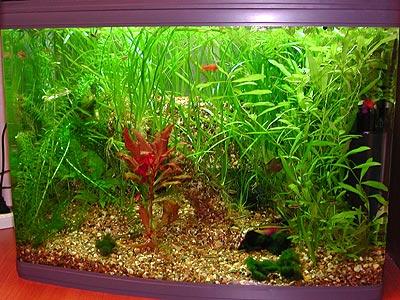 100 литровый аквариум с пластиковым гротом.