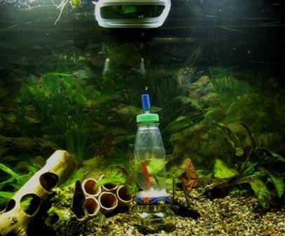 Простейший генератор CO2 для своего аквариума