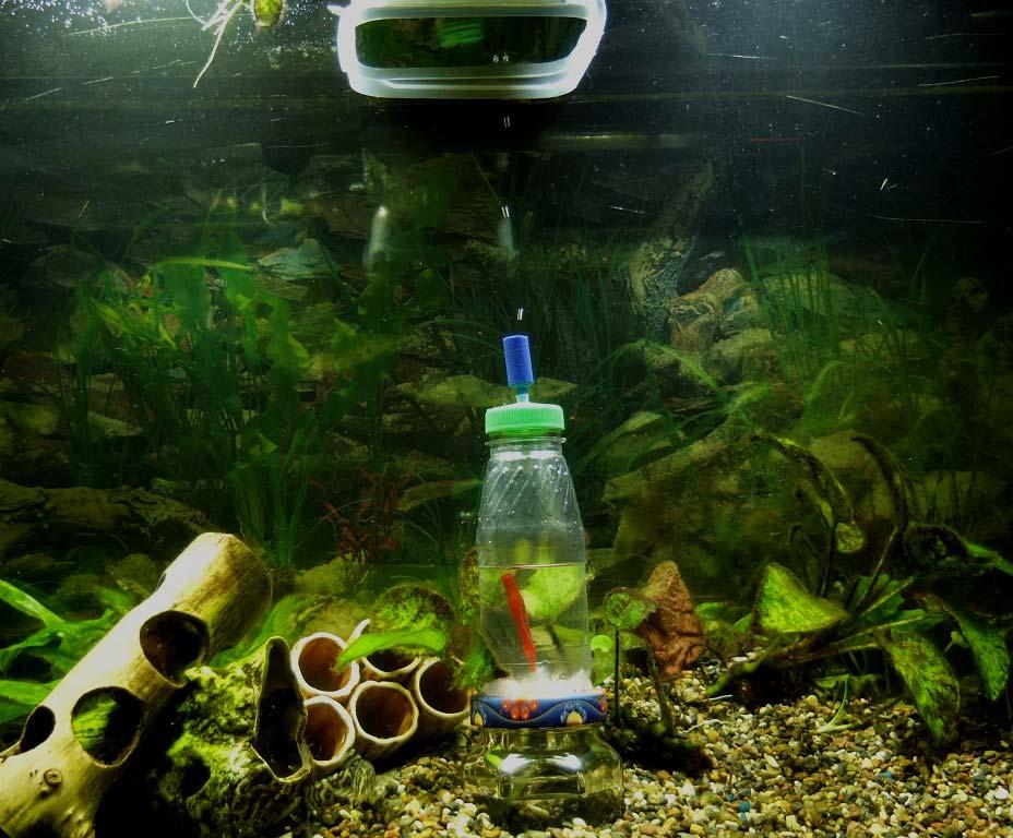 Углекислый газ в аквариуме 5