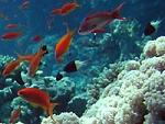 Coral       reef on background of blue sea deep